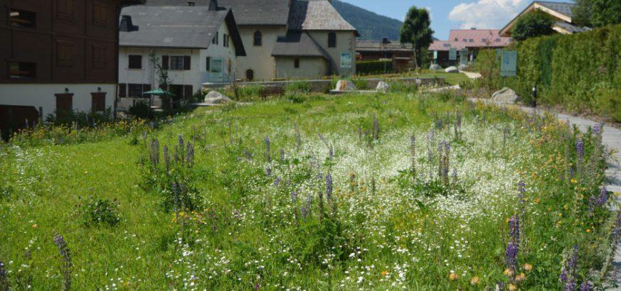 Champ-des-Cimes-diaporama-travaux-paysagers